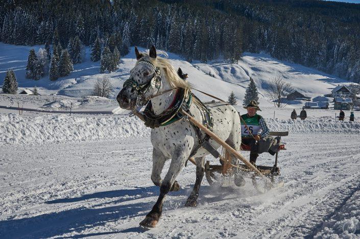 1PS Skijöring Gosau
